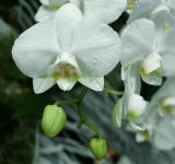 Free Photo - Wild Orchids