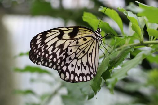 Wild Butterfly - Free Stock Photo