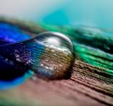 Free Photo - Water Drop on the Feather