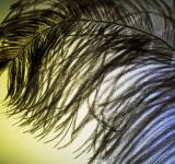Free Photo - Smooth Feather