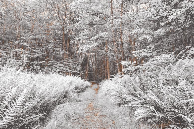 Snow Fern Trail - Free Forest Stock Photos