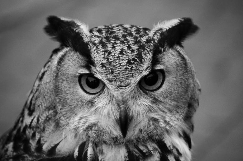 Free Stock Photo of Owl Head Created by James Stokes