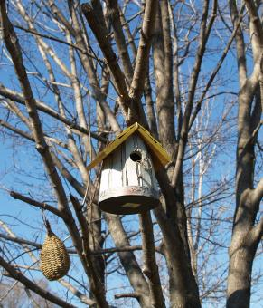 The Birdhouse - Free Stock Photo