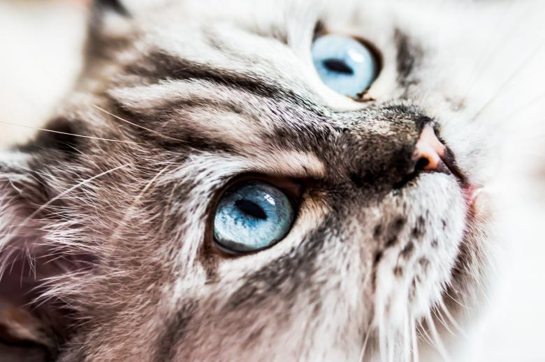 Free Stock Photo of Cat Closeup Created by Pixabay