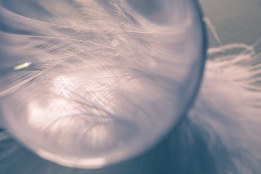 Glass Ball n Feathers - Free Stock Photo