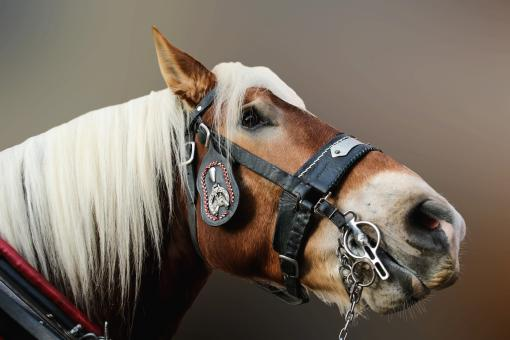 Horse Closeup - Free Stock Photo
