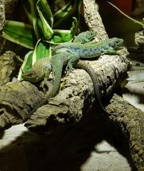 Reptiles in the Zoo - Free Stock Photo