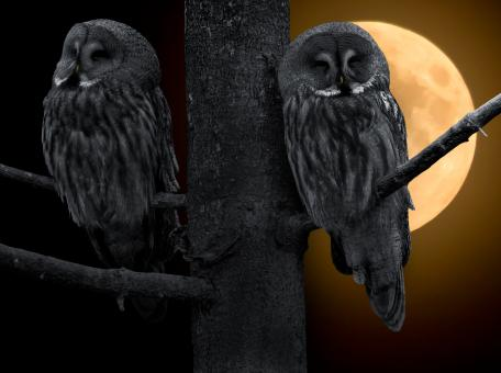 Owls on the Tree - Free Stock Photo