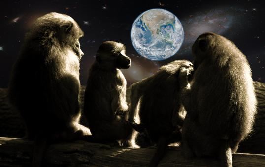 Planet of the Apes - Free Stock Photo