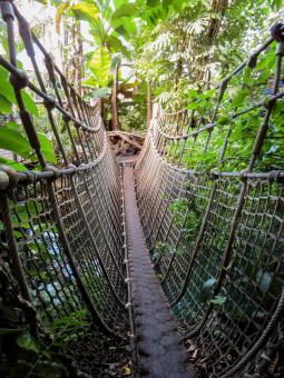 Hanging Bridge - Free Stock Photo