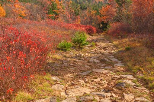 Autumn Christmas Trail - HDR - Free Stock Photo
