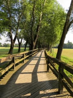 Wooden Bridge - Free Stock Photo