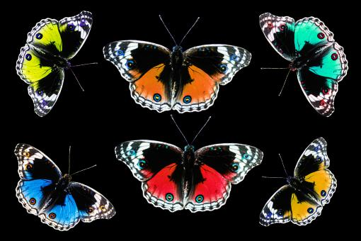 Butterflies on Paper - Free Stock Photo