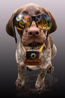 Dog with Shades - Free Stock Photo