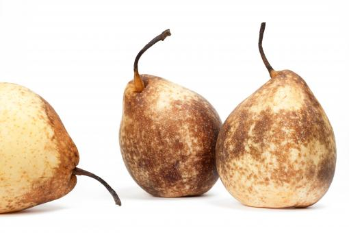 Pears - Free Stock Photo