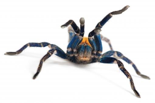 spider  - Free Stock Photo