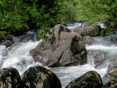 Running Water Stream - Free Stock Photo
