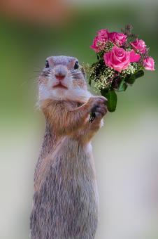 Holding Roses - Free Stock Photo
