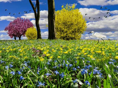 Spring Meadow - Free Stock Photo