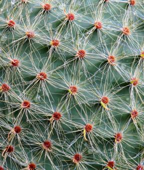 Thorny Cactus - Free Stock Photo