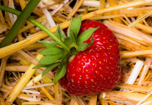 Fresh Strawberry - Free Stock Photo