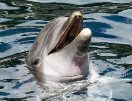 Dolphin in the Sea - Free Stock Photo