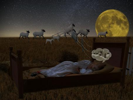 Sleeping in the Field - Free Stock Photo