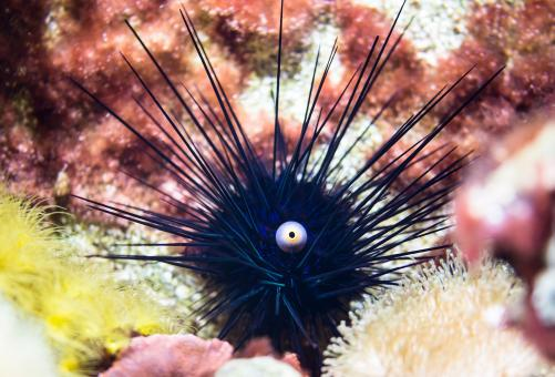 Sea Urchins - Free Stock Photo