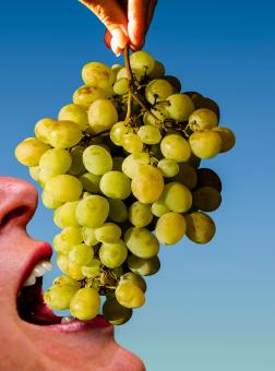 Eating Grapes - Free Stock Photo
