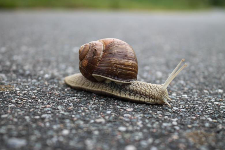Closeup of snail on the street Free Photo