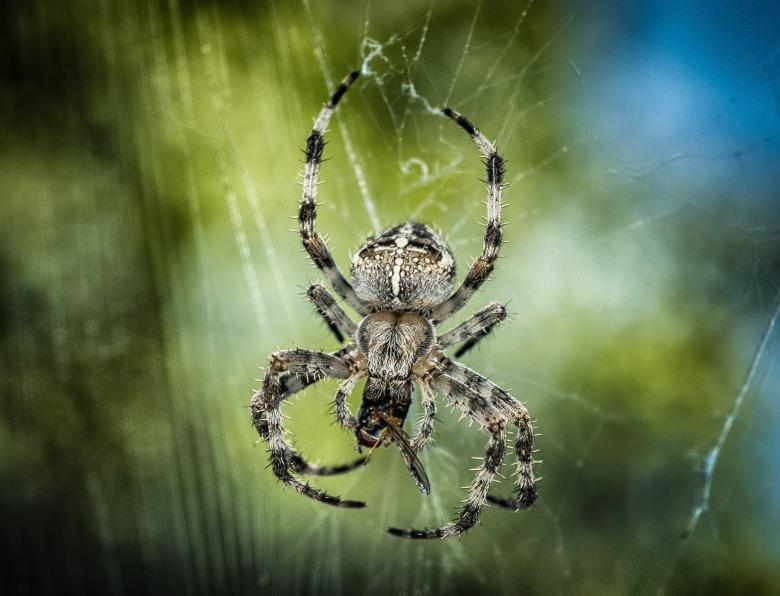 Free Stock Photo of Spider Closeup Created by Pixabay