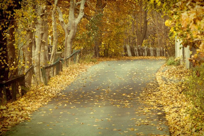 Free Stock Photo of Autumn leaves on road Created by Geoffrey Whiteway