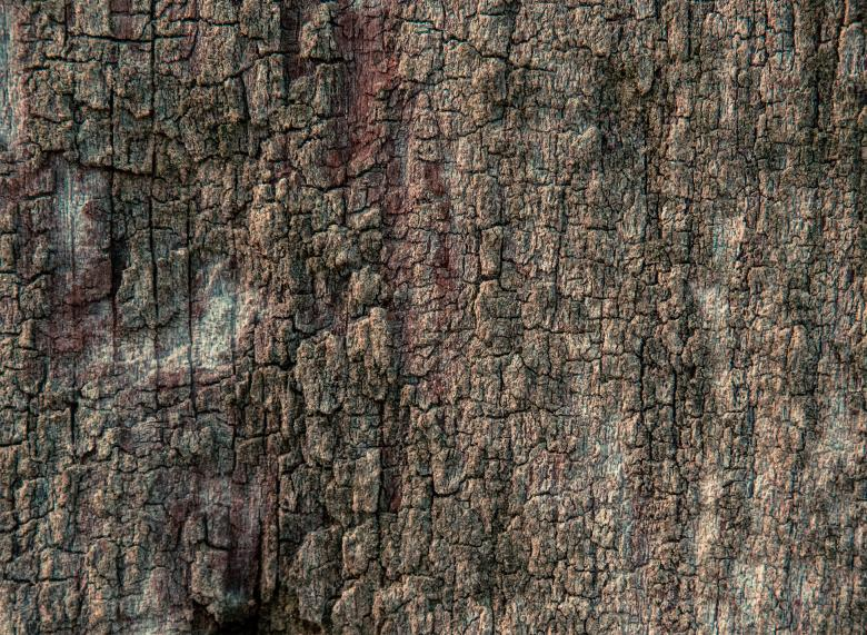 Free Stock Photo of Wood texture Created by Alen