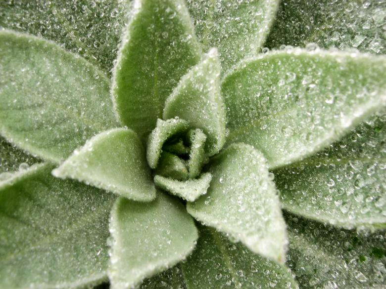 Free Stock Photo of Dew on Lovely Plant Created by Barbara Din