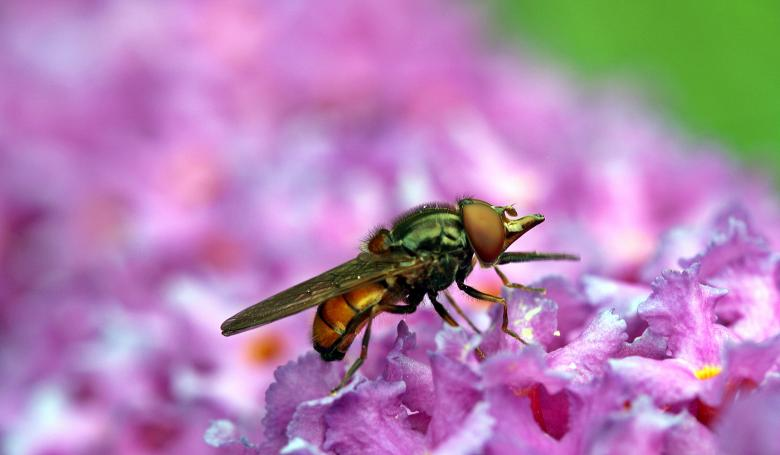 Free Stock Photo of Fly in the Garden Created by Pixabay