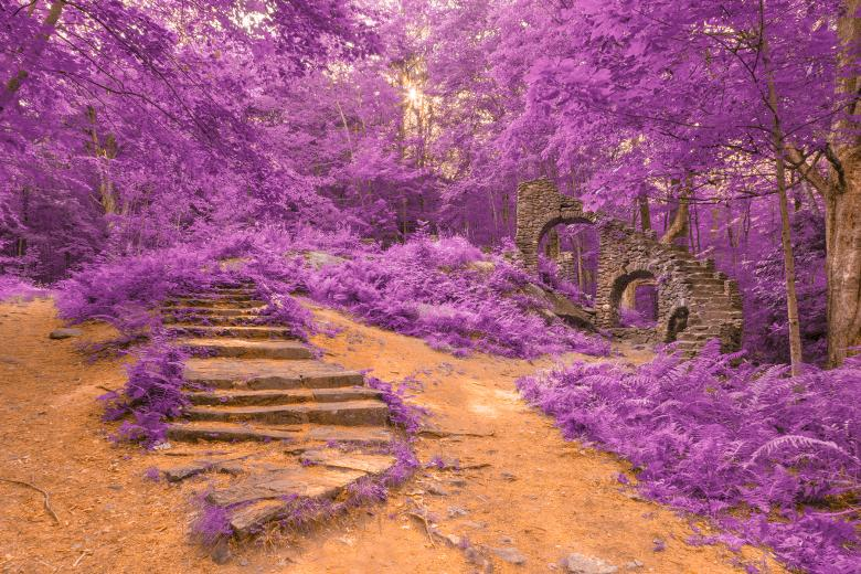 Free Stock Photo of Sun Kissed Forest Castle Ruins - Purple Fantasy HDR Created by Nicolas Raymond