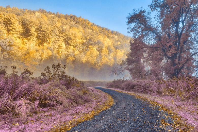 Free Stock Photo of Misty McDade Trail - Gold Lavender Fantasy HDR Created by Nicolas Raymond
