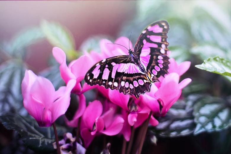 Macro Butterfly - Free Floral Backgrounds