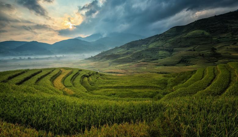 Free Stock Photo of Mountainous Rice Plantation