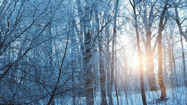Icy Trees - Free Forest Stock Photos