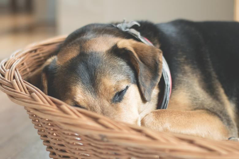 Sleeping Dog - Free Dog Stock Photos
