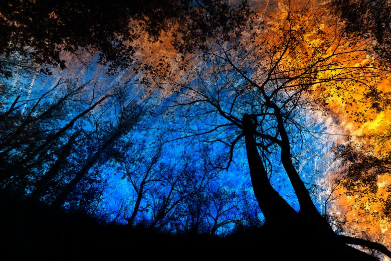 Deep Forest Impact - Free Spooky Stock Photos