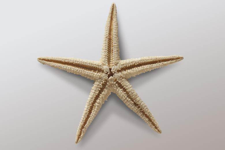 Free Stock Photo of Starfish Created by Pixabay