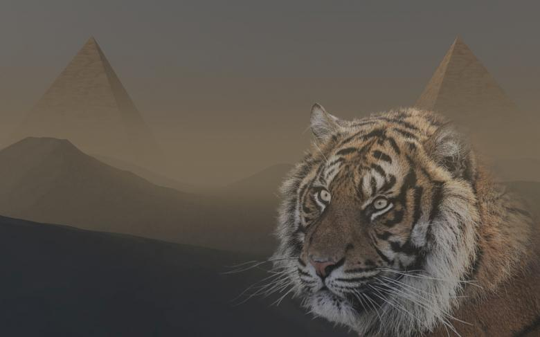 Free Stock Photo of Tiger in Egypt Created by bykst