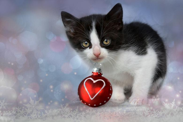 Kitten in Christmas - Free Christmas Stock Photos