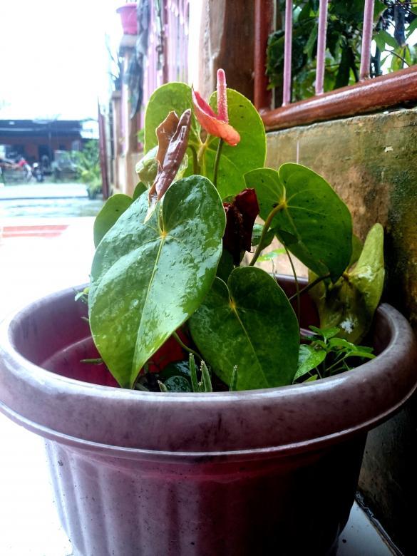 7ac4ac9c5eb Fresh plant - Free Stock Photo by febri nura tarigan on Stockvault.net