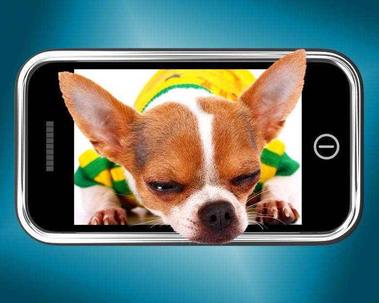 Free Stock Photo of Small Chihuahua Dog Photo On Mobile Phone Created by Stuart Miles