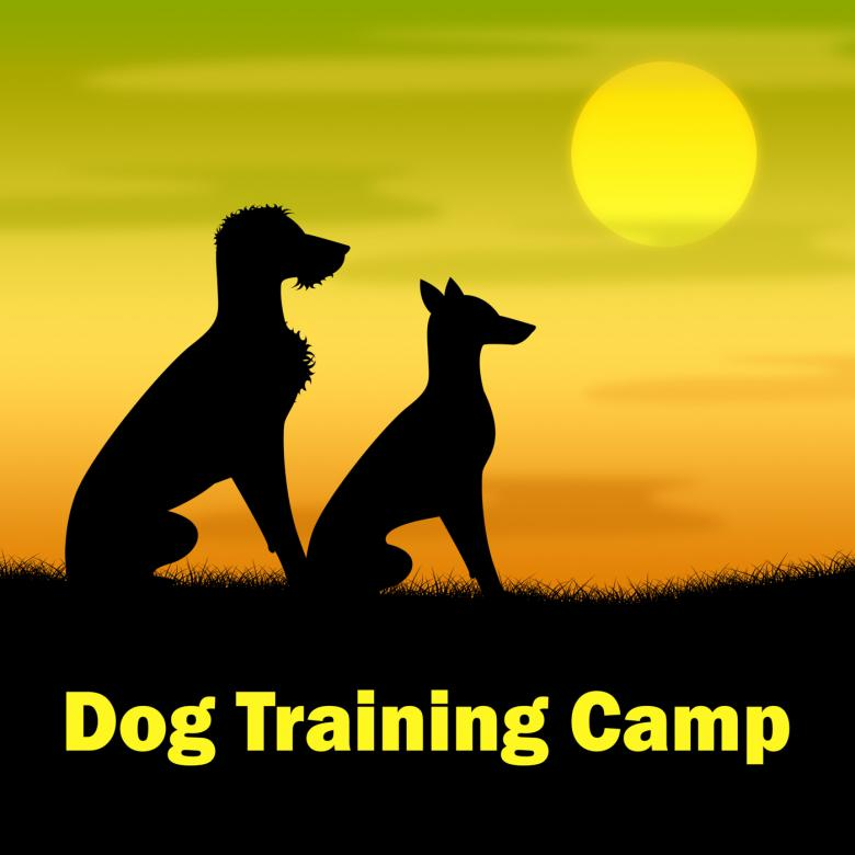 Free Stock Photo of Dog Training Camp Means Coach Pups And Doggy Created by Stuart Miles