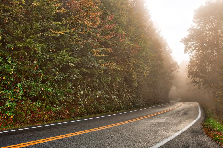 Free Stock Photo of Slick Mist Forest Road - HDR Created by Nicolas Raymond