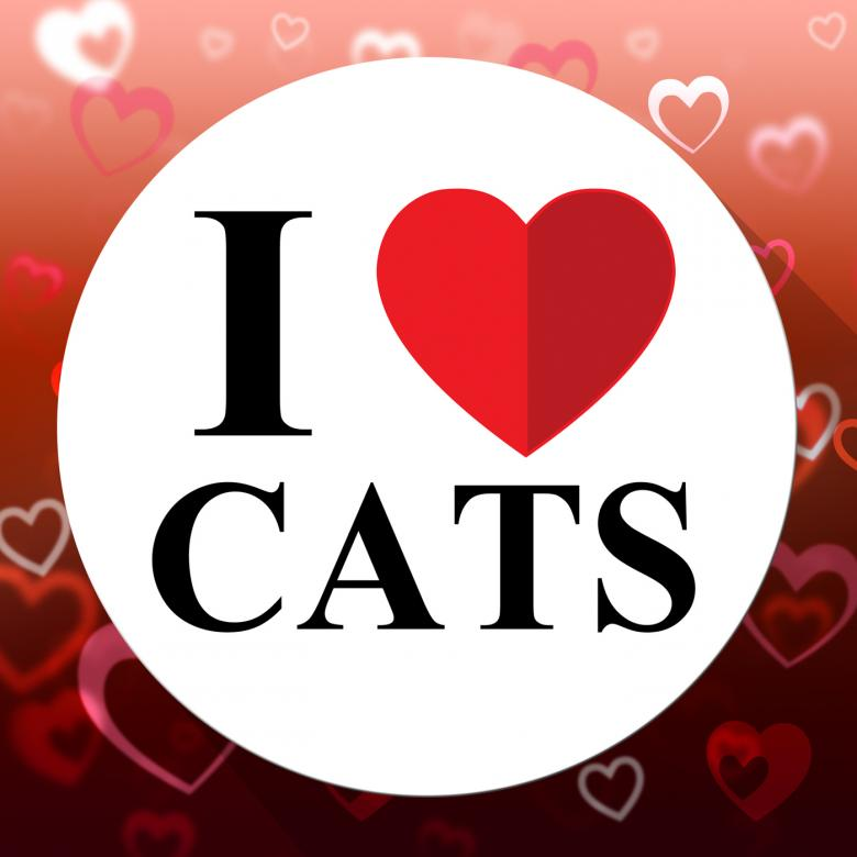 Free stock image of Love Cats Indicates Domestic Fabulous And Like Cat created by Stuart Miles